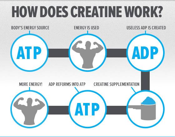 Creatine, the versatile sports supplement